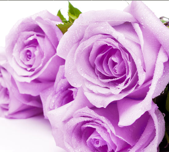 morristown nj florists